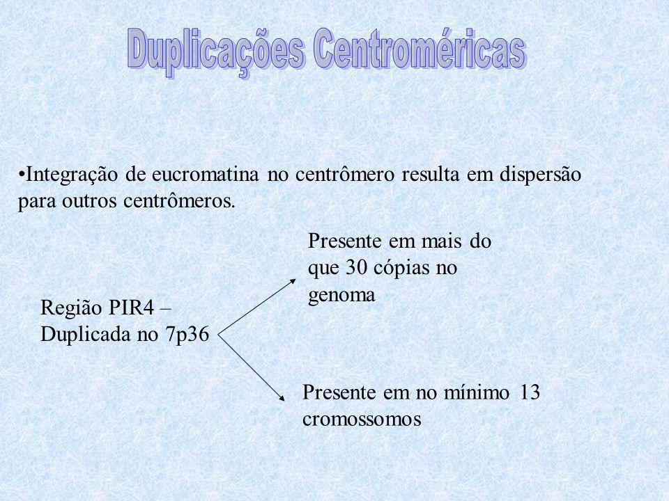 Integração de eucromatina no centrômero resulta em dispersão para outros centrômeros. Região PIR4 – Duplicada no 7p36 Presente em mais do que 30 cópia