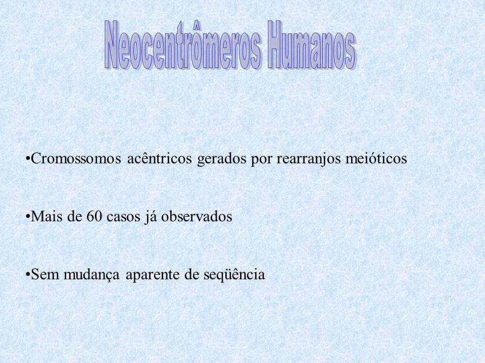 Cromossomos acêntricos gerados por rearranjos meióticos Mais de 60 casos já observados Sem mudança aparente de seqüência