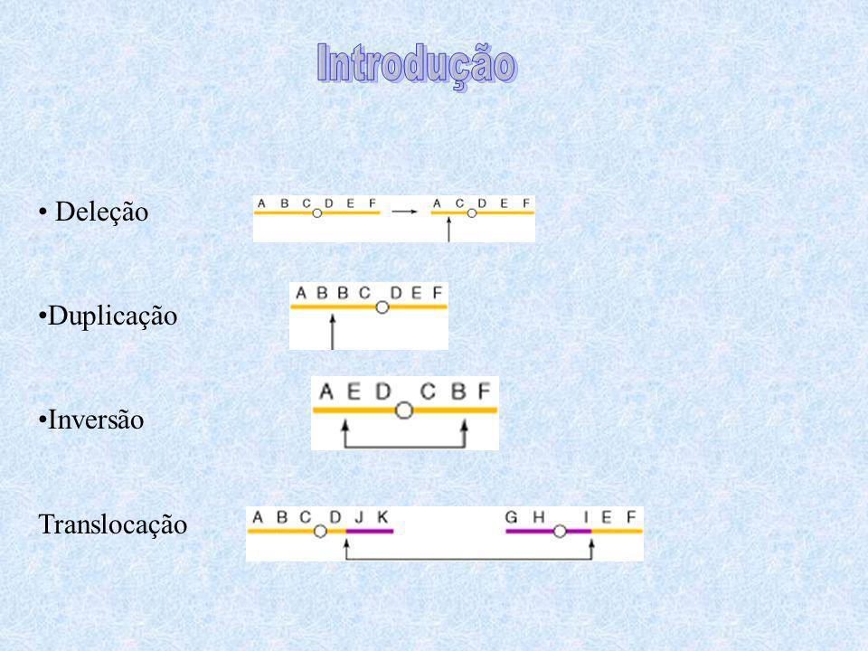 Rico em -satélites (seqüência de ~171pb) Rico em duplicações segmentais (5% do genoma) Intracromossomais Intercromossomais Deficiente em recombinação