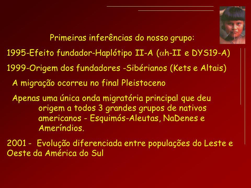 Primeiras inferências do nosso grupo: 1995-Efeito fundador-Haplótipo II-A ( h-II e DYS19-A) 1999-Origem dos fundadores -Sibérianos (Kets e Altais) A m