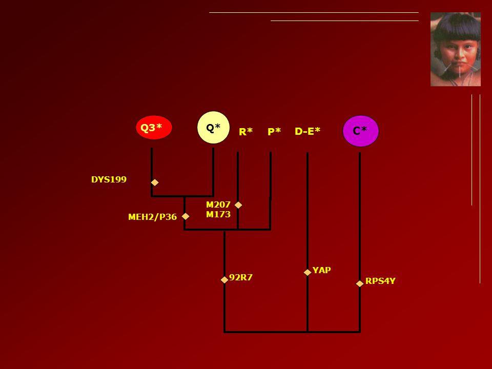 Q*Q3* P* 92R7 YAP D-E* MEH2/P36 DYS199 C* RPS4Y R* M207 M173