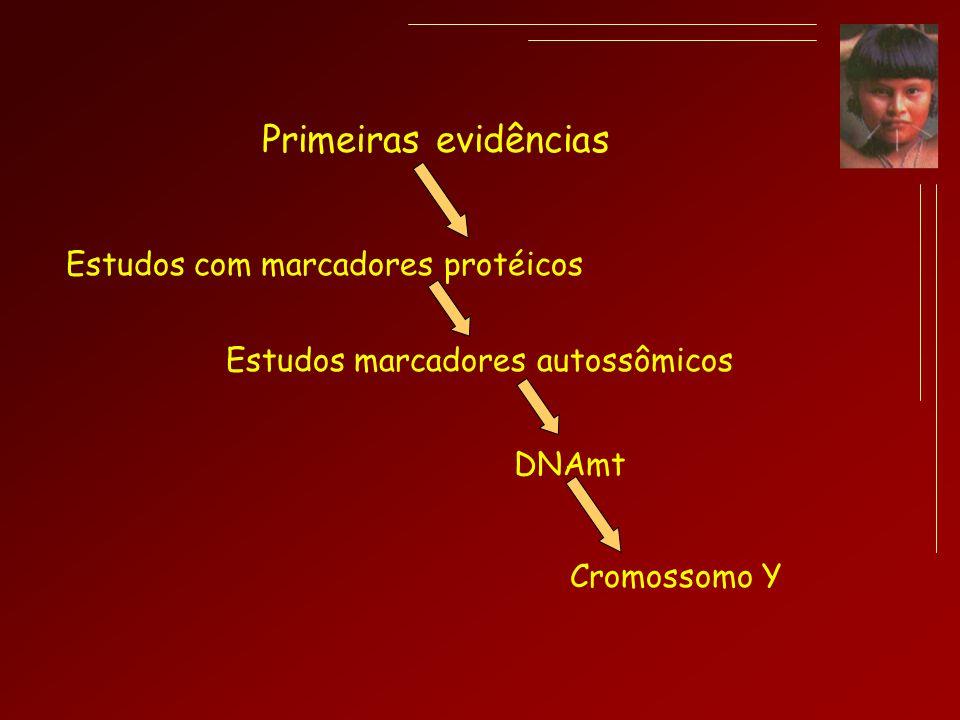 Primeiras evidências DNAmt Estudos com marcadores protéicos Estudos marcadores autossômicos Cromossomo Y