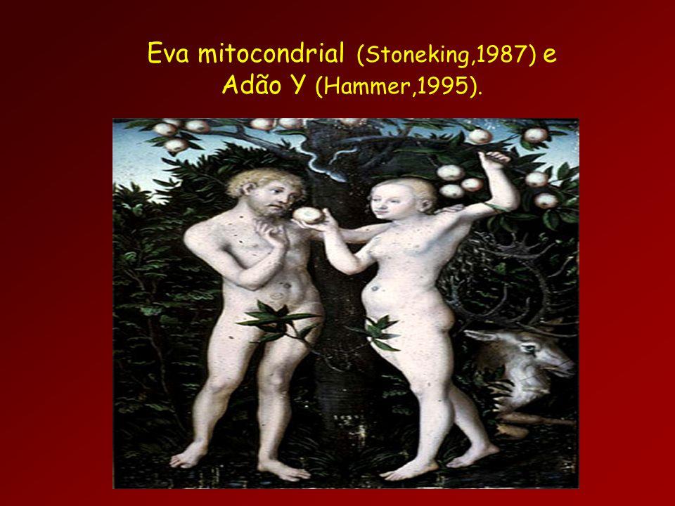 Eva mitocondrial (Stoneking,1987) e Adão Y (Hammer,1995).