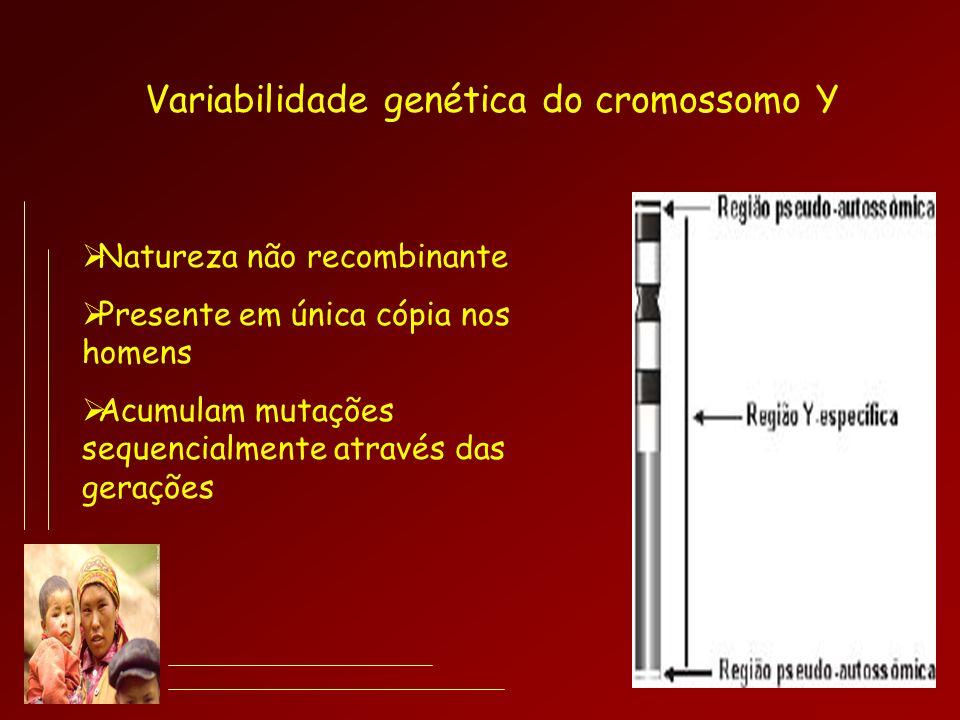 Variabilidade genética do cromossomo Y Natureza não recombinante Presente em única cópia nos homens Acumulam mutações sequencialmente através das gera
