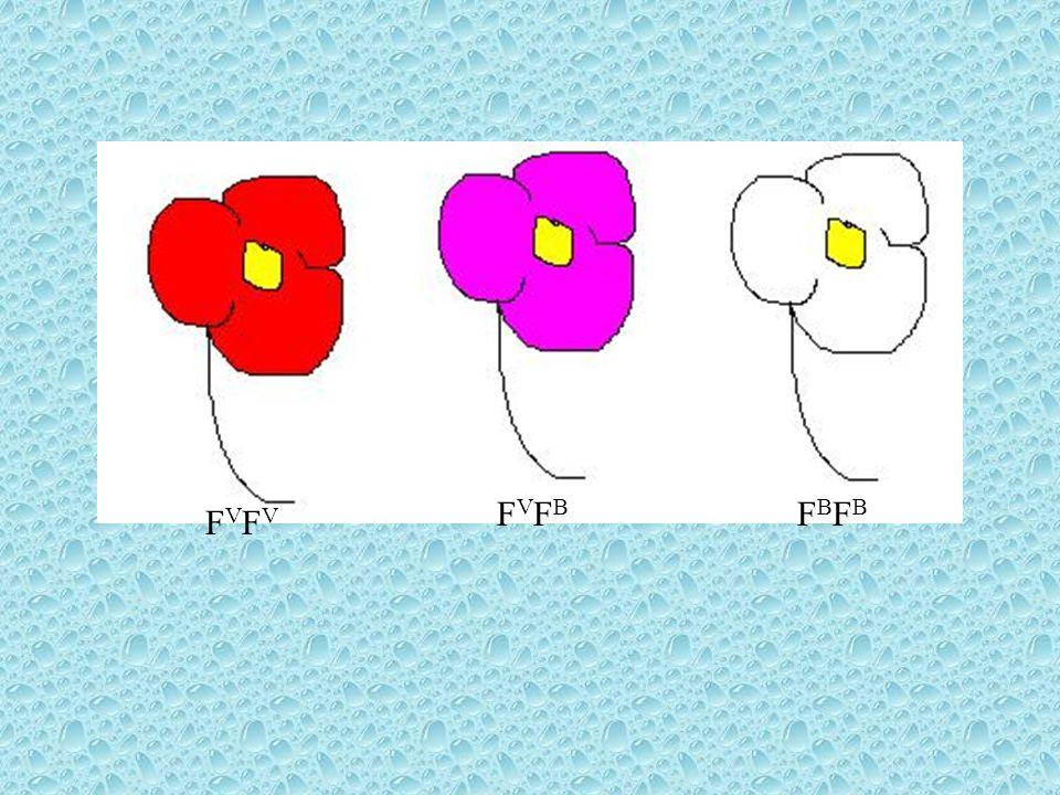 Co-dominância Quando indivíduos heterozigotos expressam os dois fenótipos simultaneamente fala-se em co-dominância.