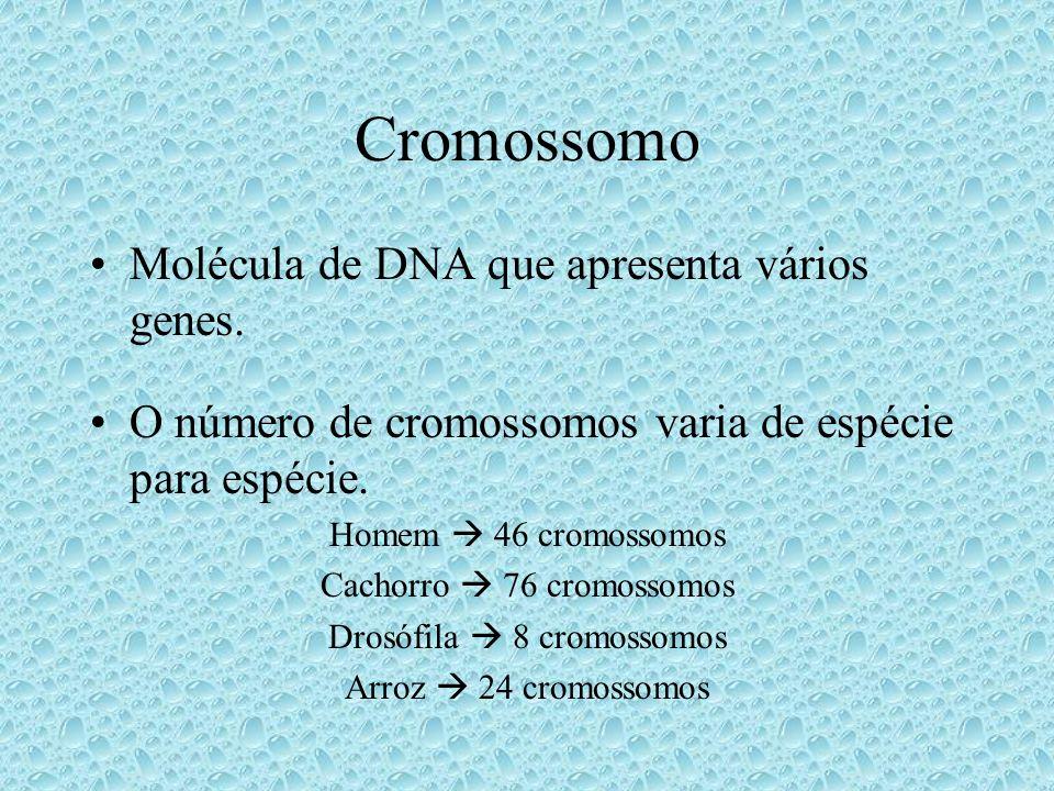 Cromossomos Homólogos Um enviado pela mãe e outro pelo pai.