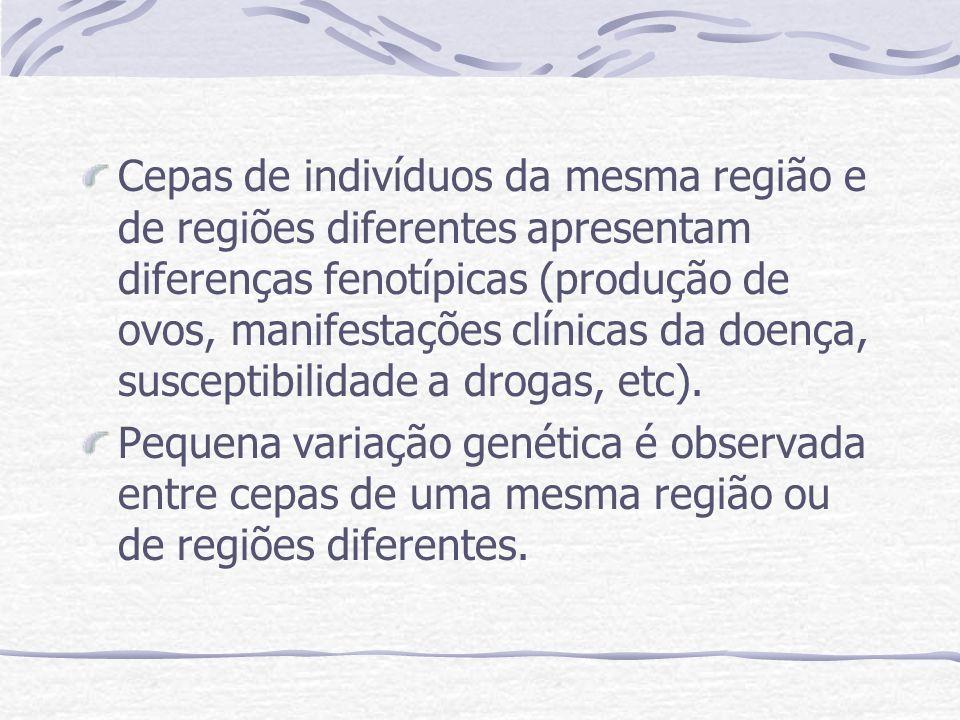 Através de experimentos de RFLP e RAPD observa-se diferenças moleculares entre espécies de Schistosoma e pouca variação genética entre cepas, mesmo de cepas de diferentes continentes.