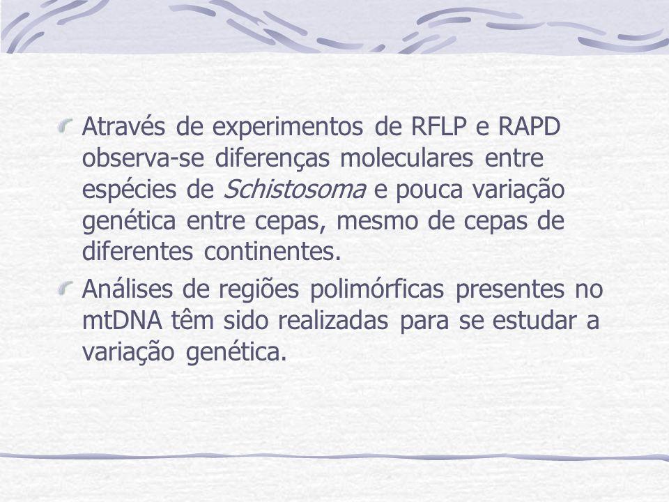 Através de experimentos de RFLP e RAPD observa-se diferenças moleculares entre espécies de Schistosoma e pouca variação genética entre cepas, mesmo de