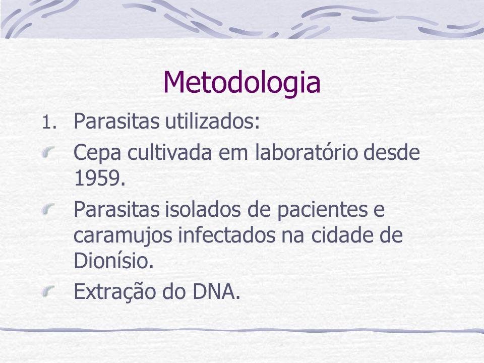 Metodologia 1. Parasitas utilizados: Cepa cultivada em laboratório desde 1959. Parasitas isolados de pacientes e caramujos infectados na cidade de Dio