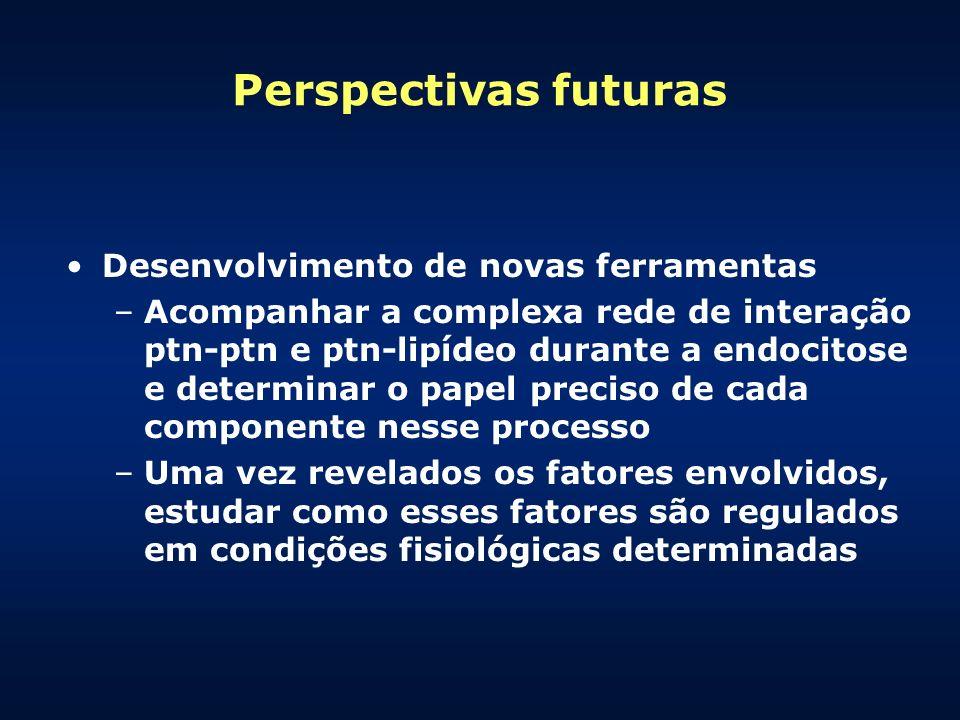 Perspectivas futuras Desenvolvimento de novas ferramentas –Acompanhar a complexa rede de interação ptn-ptn e ptn-lipídeo durante a endocitose e determ
