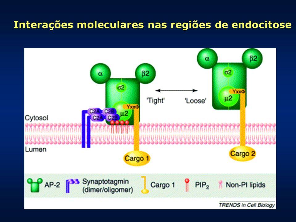 Interações moleculares nas regiões de endocitose