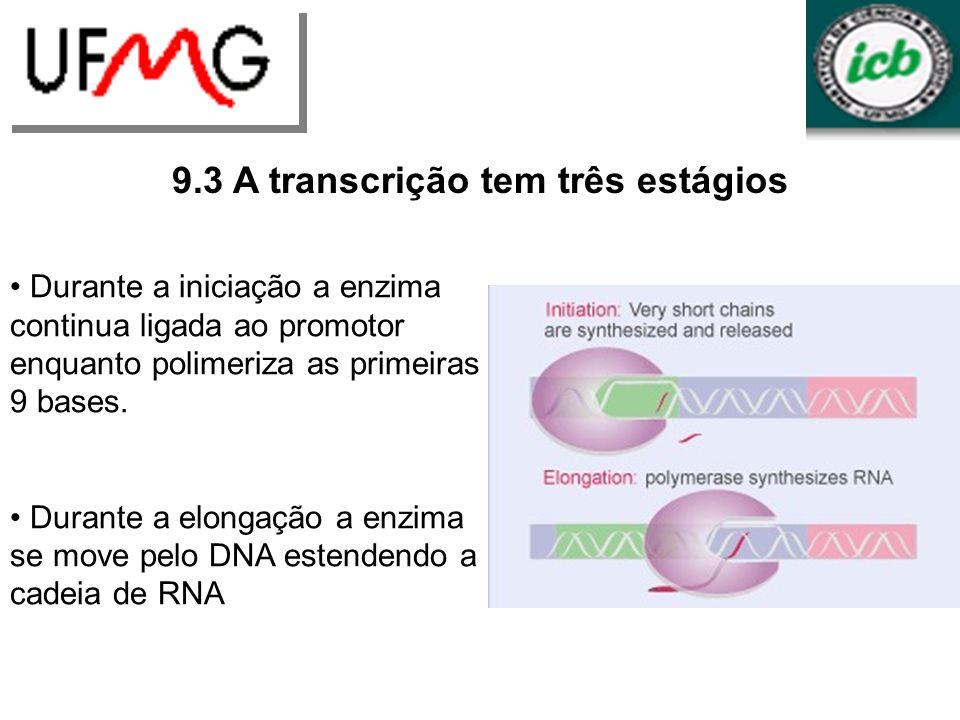 URLGA 9.3 A transcrição tem três estágios Durante a iniciação a enzima continua ligada ao promotor enquanto polimeriza as primeiras 9 bases. Durante a
