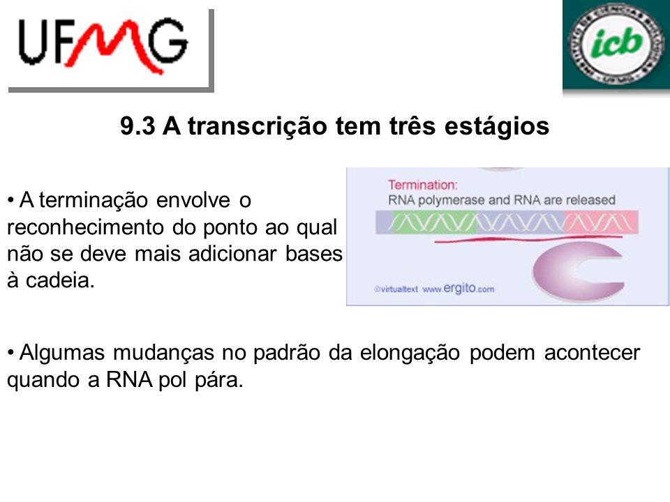 URLGA 9.3 A transcrição tem três estágios A terminação envolve o reconhecimento do ponto ao qual não se deve mais adicionar bases à cadeia. Algumas mu