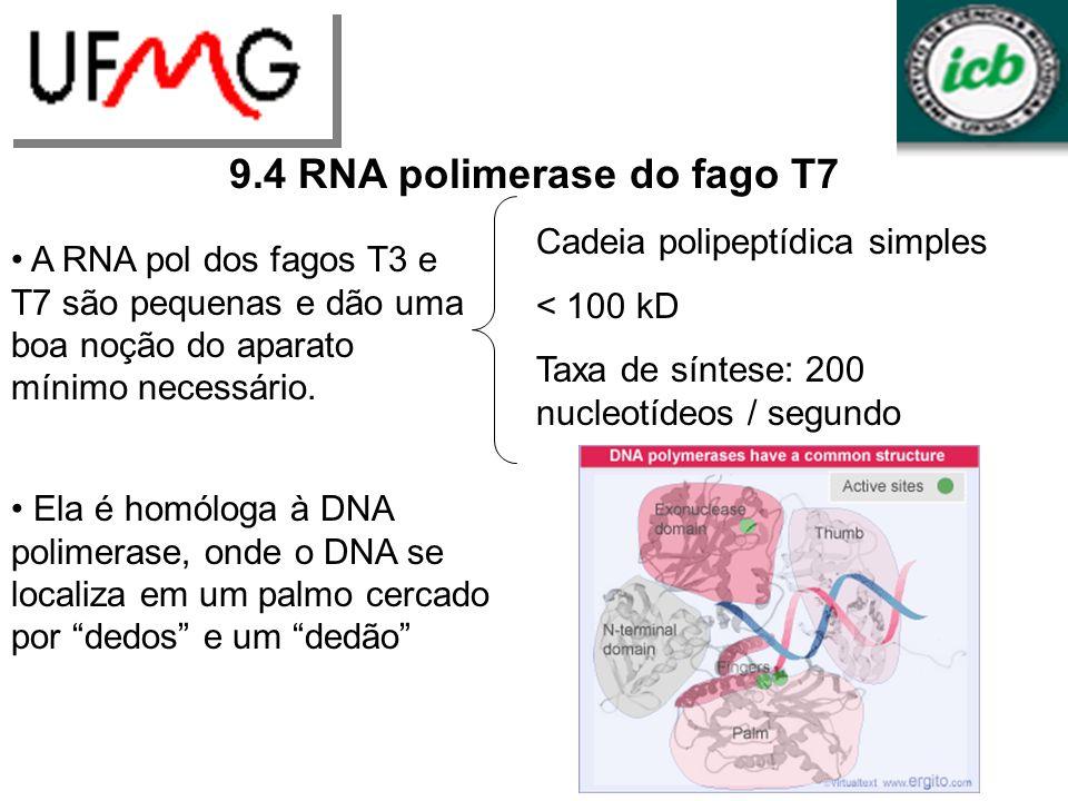 LGCMURLGA 9.4 RNA polimerase do fago T7 A RNA pol dos fagos T3 e T7 são pequenas e dão uma boa noção do aparato mínimo necessário. Cadeia polipeptídic