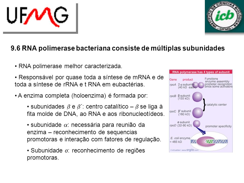 9.6 RNA polimerase bacteriana consiste de múltiplas subunidades RNA polimerase melhor caracterizada. Responsável por quase toda a síntese de mRNA e de