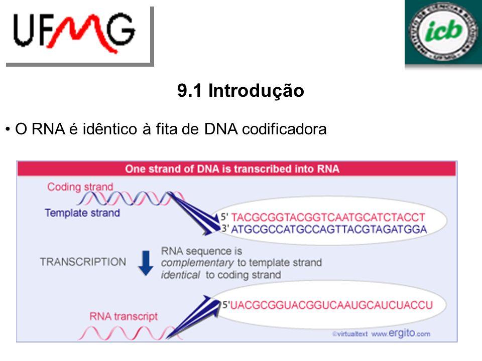 LGCMURLGA 9.1 Introdução O RNA é idêntico à fita de DNA codificadora