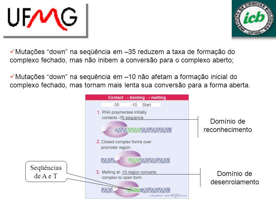 Mutações down na seqüência em –35 reduzem a taxa de formação do complexo fechado, mas não inibem a conversão para o complexo aberto; Mutações down na