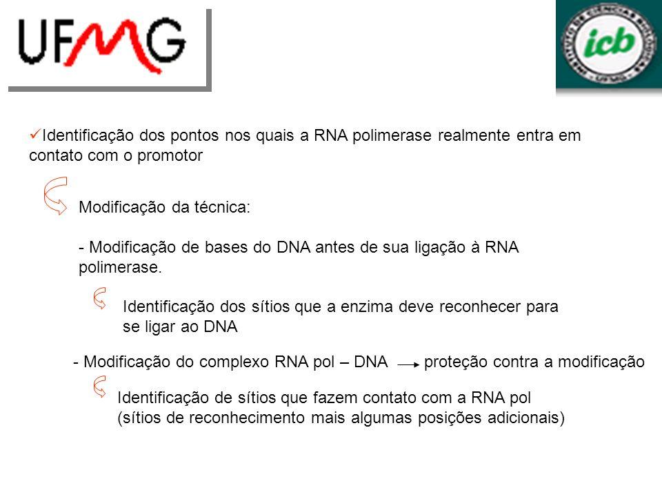 Identificação dos pontos nos quais a RNA polimerase realmente entra em contato com o promotor Modificação da técnica: - Modificação de bases do DNA an
