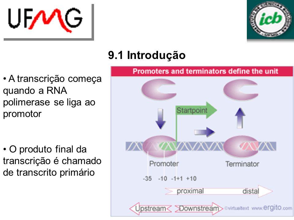 9.5 Um modelo para o movimento da enzima é sugerido pela estrutura cristalizada Estrutura comum entre RNA polimerase bacteriana e eucariótica: Canal na superfície: DNA – 16 a 25 bp.