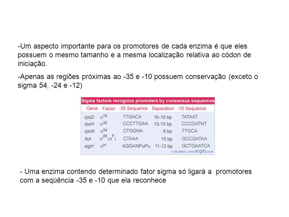 -Um aspecto importante para os promotores de cada enzima é que eles possuem o mesmo tamanho e a mesma localização relativa ao códon de iniciação. -Ape