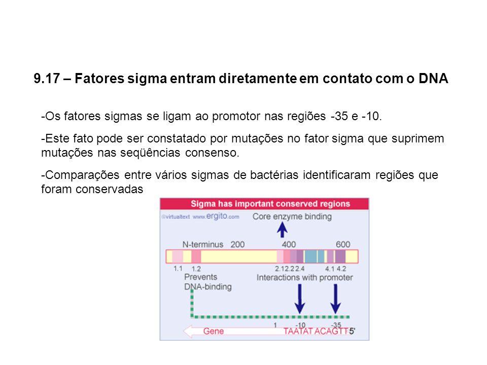 9.17 – Fatores sigma entram diretamente em contato com o DNA -Os fatores sigmas se ligam ao promotor nas regiões -35 e -10. -Este fato pode ser consta
