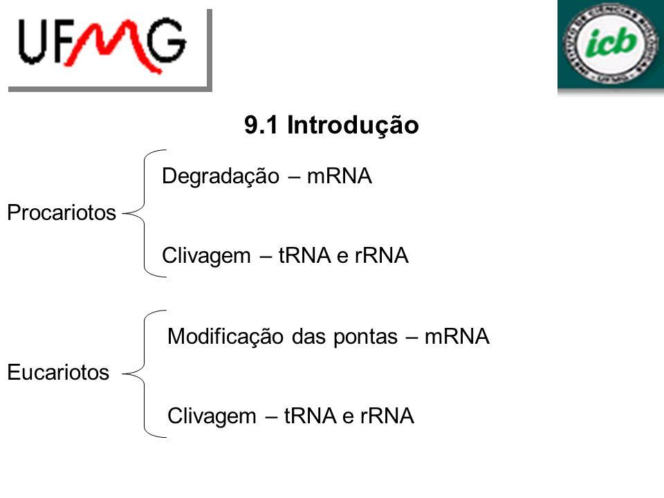 Mutações em rho tem influência variada na terminação Terminadores diferentes requerem níveis diferentes do fator rho para terminação Algumas mutações em rho podem ser suprimidas por mutações em outros genes método para identificar proteínas que interagem com rho
