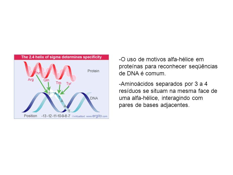 -O uso de motivos alfa-hélice em proteínas para reconhecer seqüências de DNA é comum. -Aminoácidos separados por 3 a 4 resíduos se situam na mesma fac