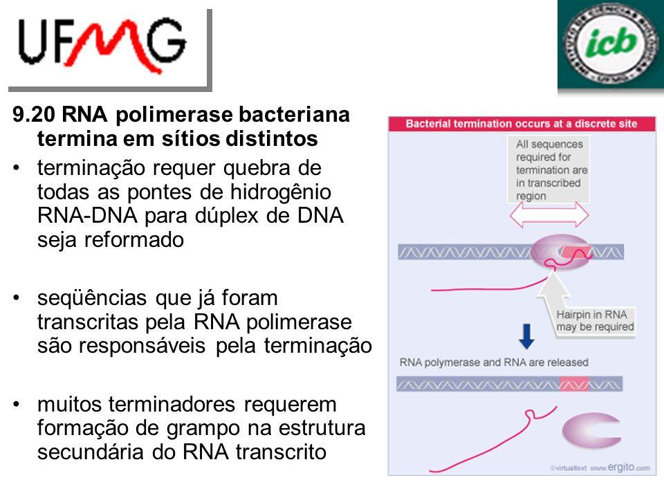 9.20 RNA polimerase bacteriana termina em sítios distintos terminação requer quebra de todas as pontes de hidrogênio RNA-DNA para dúplex de DNA seja r