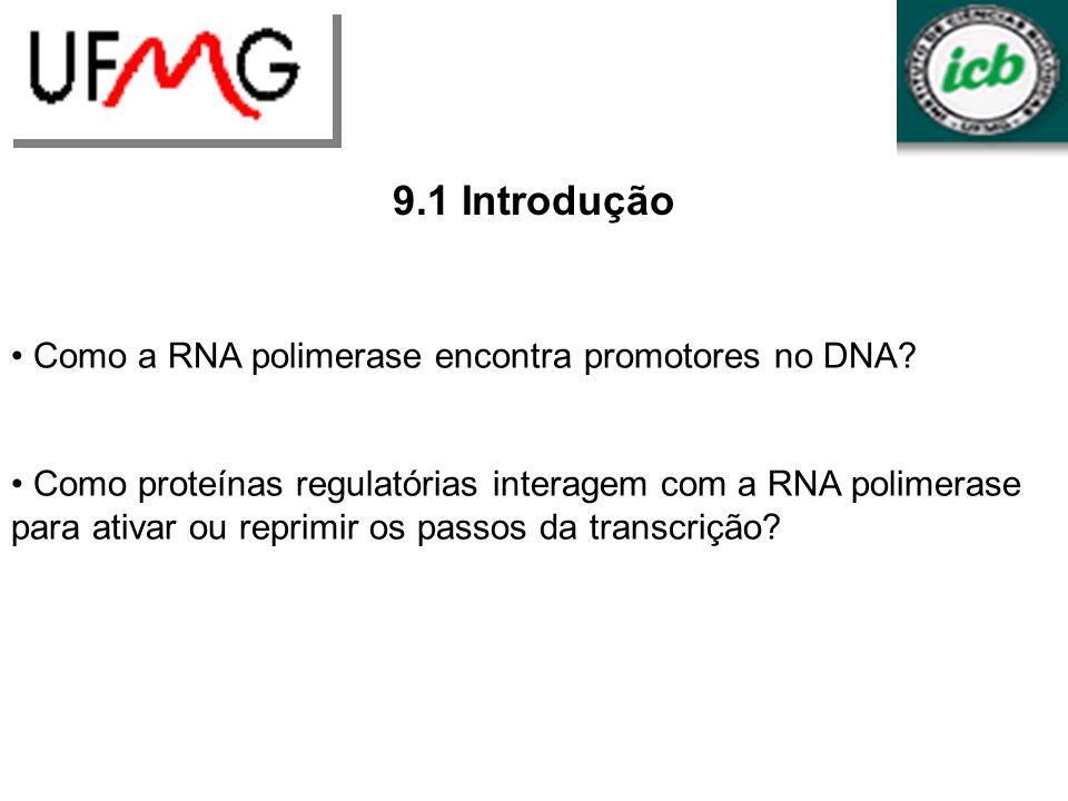 URLGA 9.1 Introdução Como a RNA polimerase encontra promotores no DNA? Como proteínas regulatórias interagem com a RNA polimerase para ativar ou repri