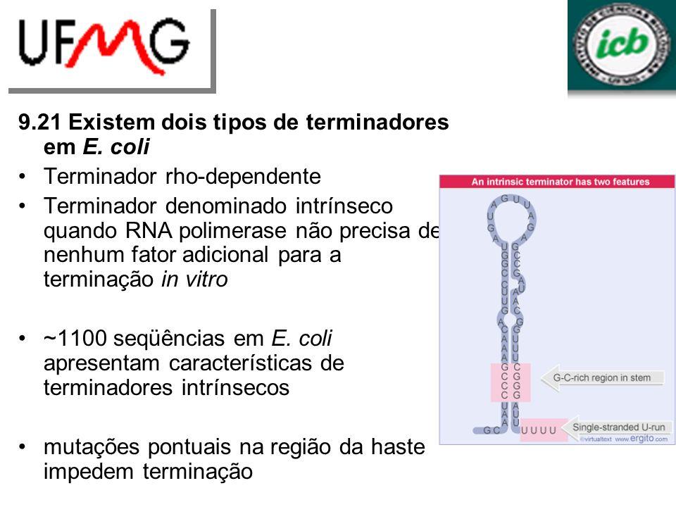 9.21 Existem dois tipos de terminadores em E. coli Terminador rho-dependente Terminador denominado intrínseco quando RNA polimerase não precisa de nen