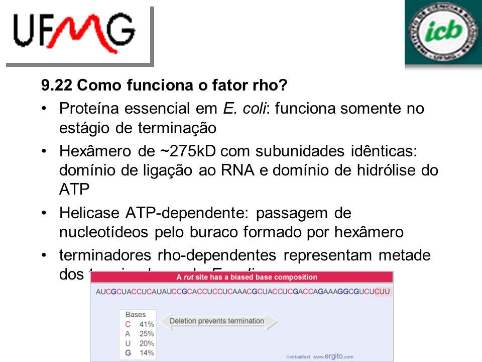 9.22 Como funciona o fator rho? Proteína essencial em E. coli: funciona somente no estágio de terminação Hexâmero de ~275kD com subunidades idênticas: