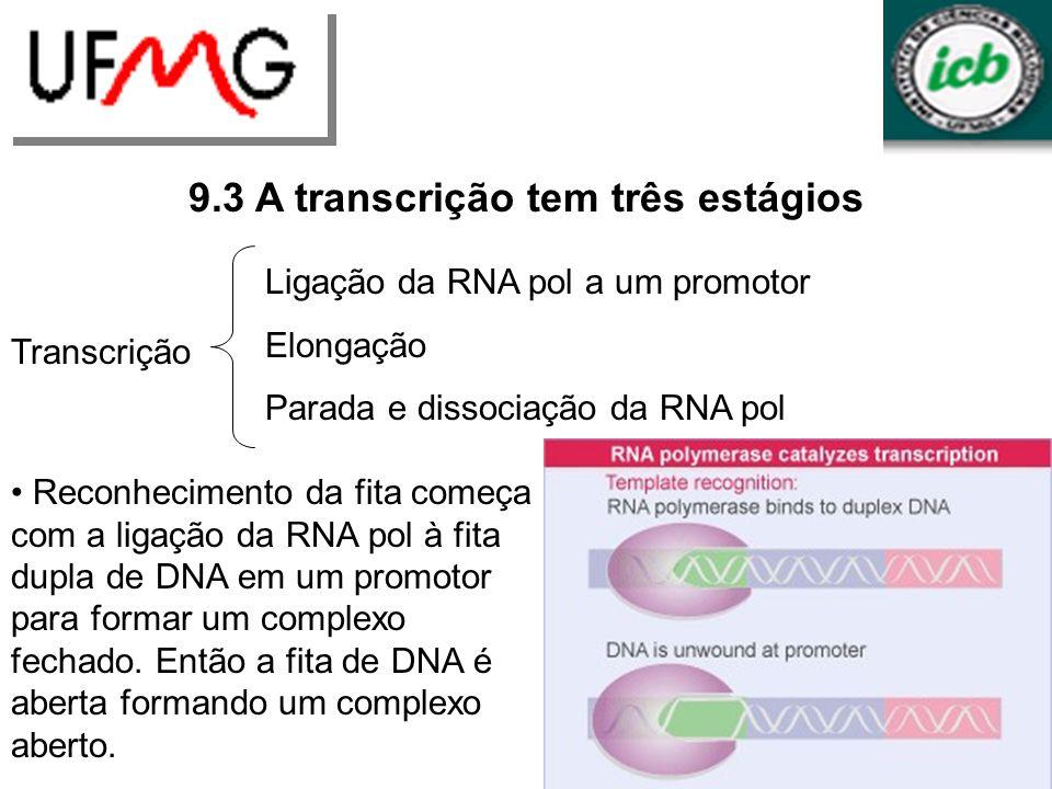 URLGA 9.3 A transcrição tem três estágios Durante a iniciação a enzima continua ligada ao promotor enquanto polimeriza as primeiras 9 bases.