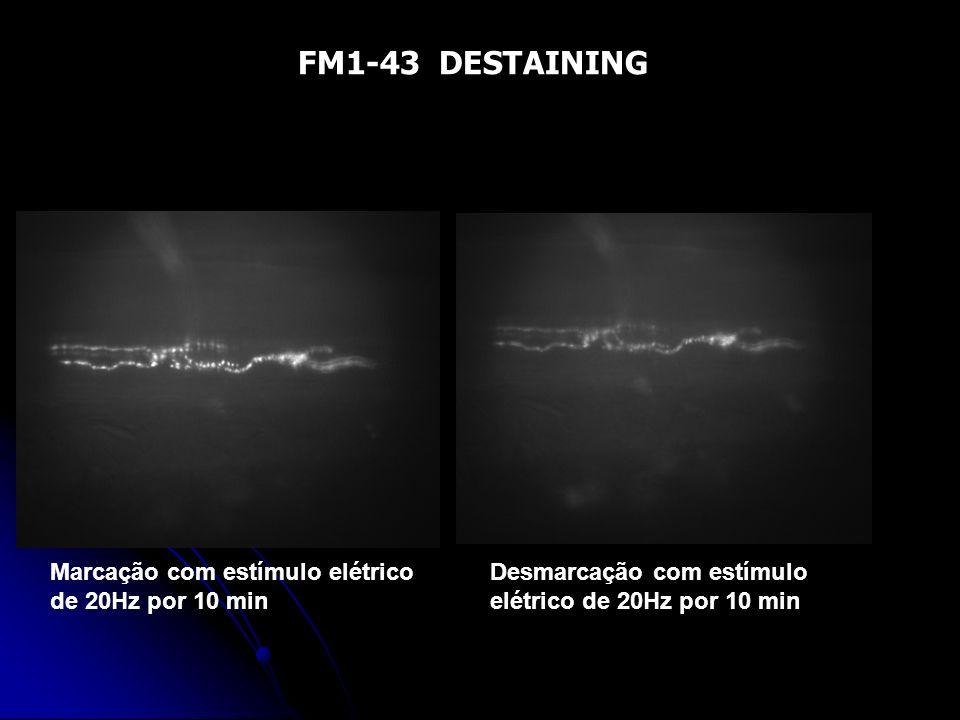 FM1-43 DESTAINING Marcação com estímulo elétrico de 20Hz por 10 min Desmarcação com estímulo elétrico de 20Hz por 10 min