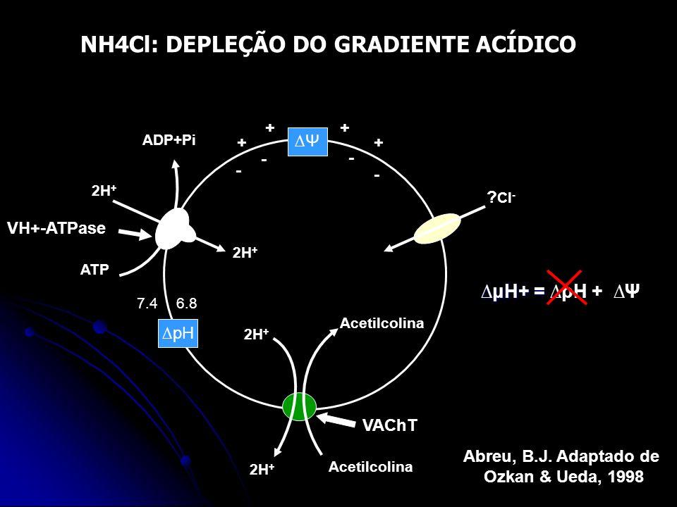 ? Cl - ADP+Pi 2H + ATP Acetilcolina 2H + Acetilcolina pH Ψ 2H + ++ ++ - - - - 7.46.8 μH+ =μH+ = pH + Ψ Abreu, B.J. Adaptado de Ozkan & Ueda, 1998 2H +