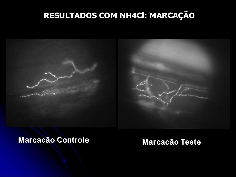 RESULTADOS COM NH4Cl: MARCAÇÃO Marcação Controle Marcação Teste