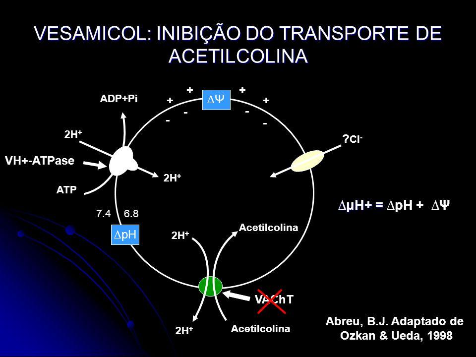 ? Cl - ADP+Pi 2H + ATP Acetilcolina 2H + Acetilcolina pH Ψ 2H + ++ ++ - - - - 7.46.8 VESAMICOL: INIBIÇÃO DO TRANSPORTE DE ACETILCOLINA μH+ =μH+ = pH +