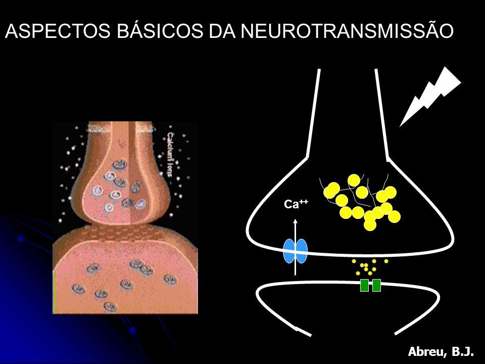 Ca ++ ASPECTOS BÁSICOS DA NEUROTRANSMISSÃO Abreu, B.J.