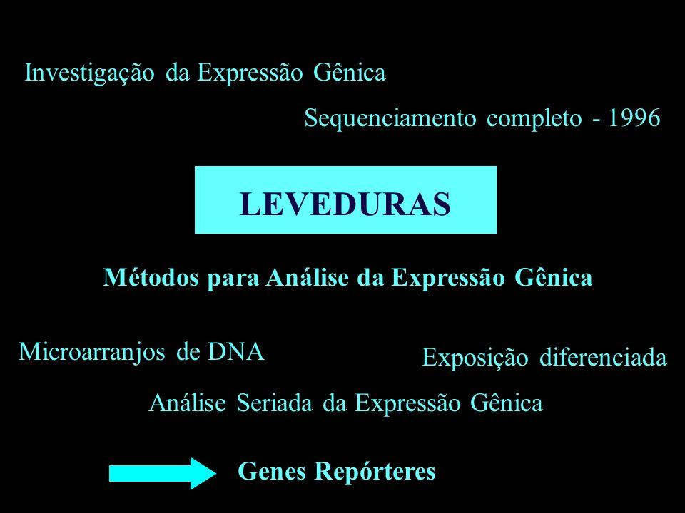 LEVEDURAS Sequenciamento completo - 1996 Investigação da Expressão Gênica Métodos para Análise da Expressão Gênica Microarranjos de DNA Exposição dife