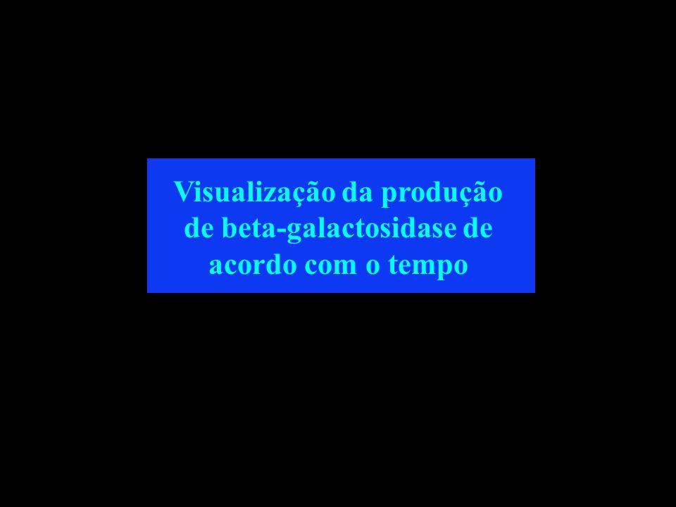 Visualização da produção de beta-galactosidase de acordo com o tempo