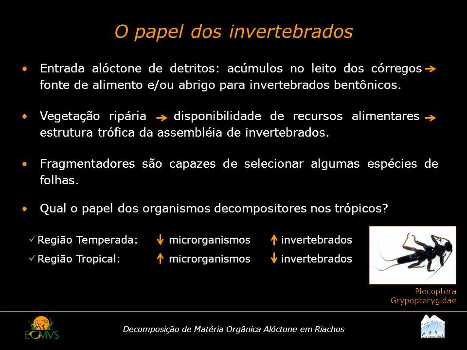 Decomposição de Matéria Orgânica Alóctone em Riachos O papel dos invertebrados Plecoptera Grypopterygidae Entrada alóctone de detritos: acúmulos no le