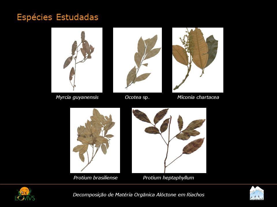 Decomposição de Matéria Orgânica Alóctone em Riachos Espécies Estudadas Myrcia guyanensisOcotea sp.Miconia chartacea Protium brasilienseProtium heptap