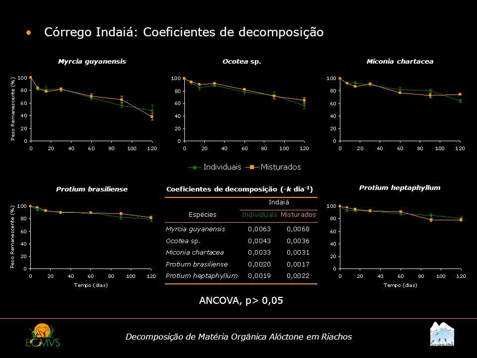 Decomposição de Matéria Orgânica Alóctone em Riachos Córrego Indaiá: Coeficientes de decomposição ANCOVA, p> 0,05 Coeficientes de decomposição (-k dia