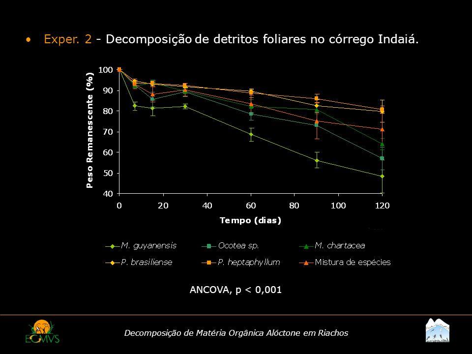 Decomposição de Matéria Orgânica Alóctone em Riachos Exper. 2 - Decomposição de detritos foliares no córrego Indaiá. ANCOVA, p < 0,001