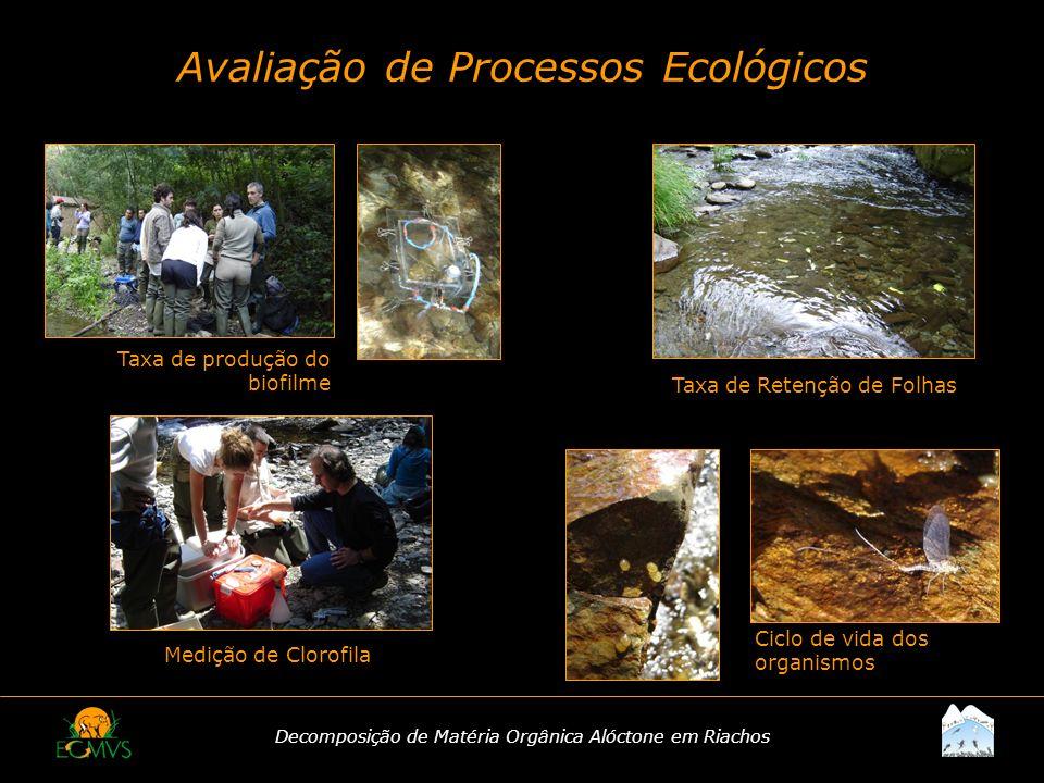Decomposição de Matéria Orgânica Alóctone em Riachos Avaliação de Processos Ecológicos Ciclo de vida dos organismos Taxa de produção do biofilme Mediç