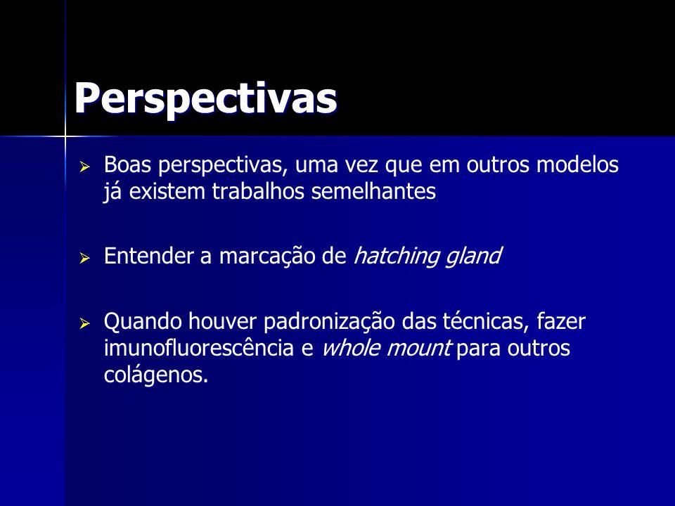 Perspectivas Boas perspectivas, uma vez que em outros modelos já existem trabalhos semelhantes Boas perspectivas, uma vez que em outros modelos já exi