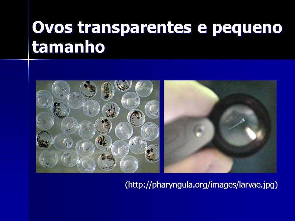 Ovos transparentes e pequeno tamanho (http://pharyngula.org/images/larvae.jpg)