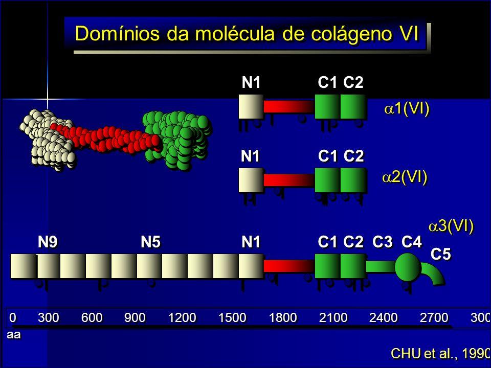 C1 C2 C1 C2 C1 C2 N1 N9 C3 C4 C5 N5 0 300 600 900 1200 1500 1800 2100 2400 2700 3000 1(VI) 2(VI) 3(VI) Domínios da molécula de colágeno VI CHU et al.,