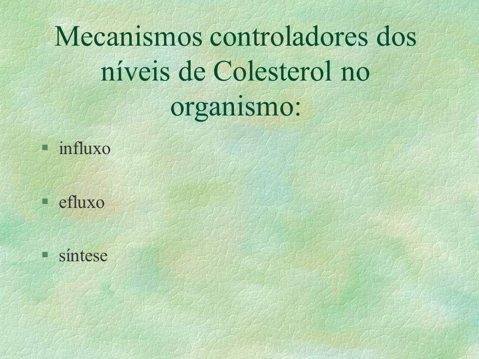 Mecanismo de Transporte em Células Adrenais e em Gônadas.. Citossol Mitocôndria. Membrana do Retículo Membrana Externa da Mitocôndria. § Proteína Regu