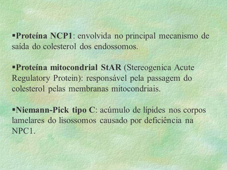 Alguns destinos do colesterol na célula: § pode ser ciclado para a membrana citoplasmática §segue para o retículo endoplasmático onde é esterificado
