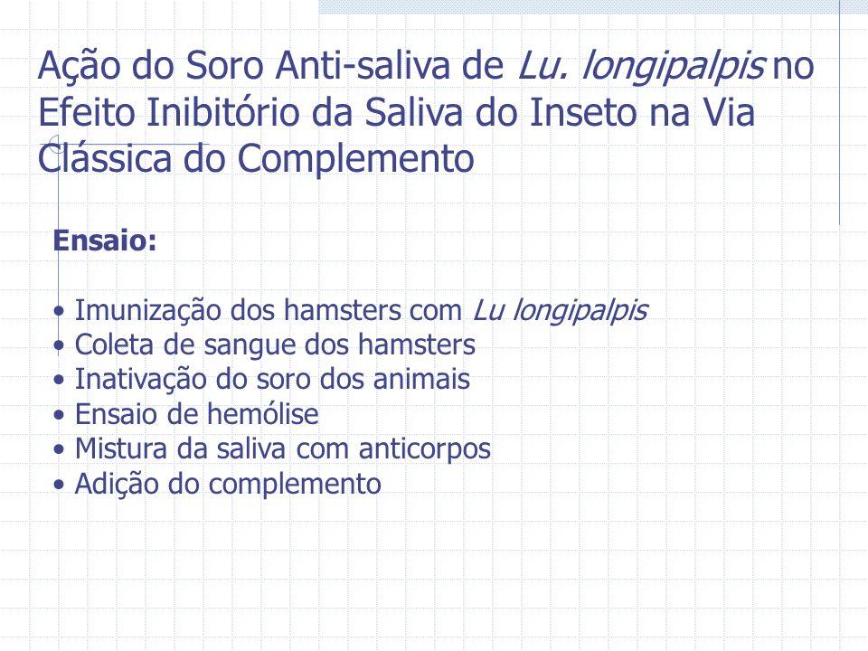 Ensaio: Imunização dos hamsters com Lu longipalpis Coleta de sangue dos hamsters Inativação do soro dos animais Ensaio de hemólise Mistura da saliva c
